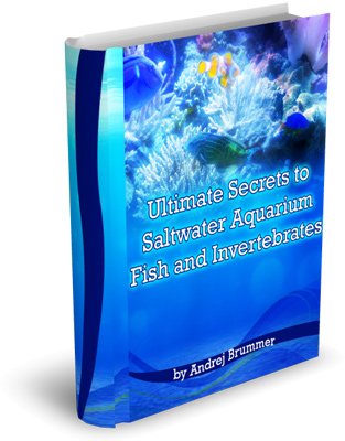 ultimate secrets of salt water aquariums and intervebreas from www.sealand.tv photo